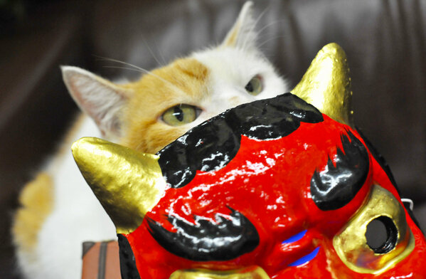 Nyaran, Setsubun, Jalan, Japanese traditions, NYC, Japanese culture, oni, cat