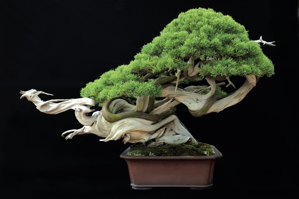 Jonathan M Singer, bonsai, Abbeville Press, NYC, Japan, Omiya Bonsai Village, Japanese aesthetics, botany