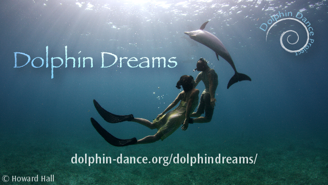 Dolphin Dreams, the Dolphin Dance Project, Indiegogo, dolphins, nature, conservation, dance, art
