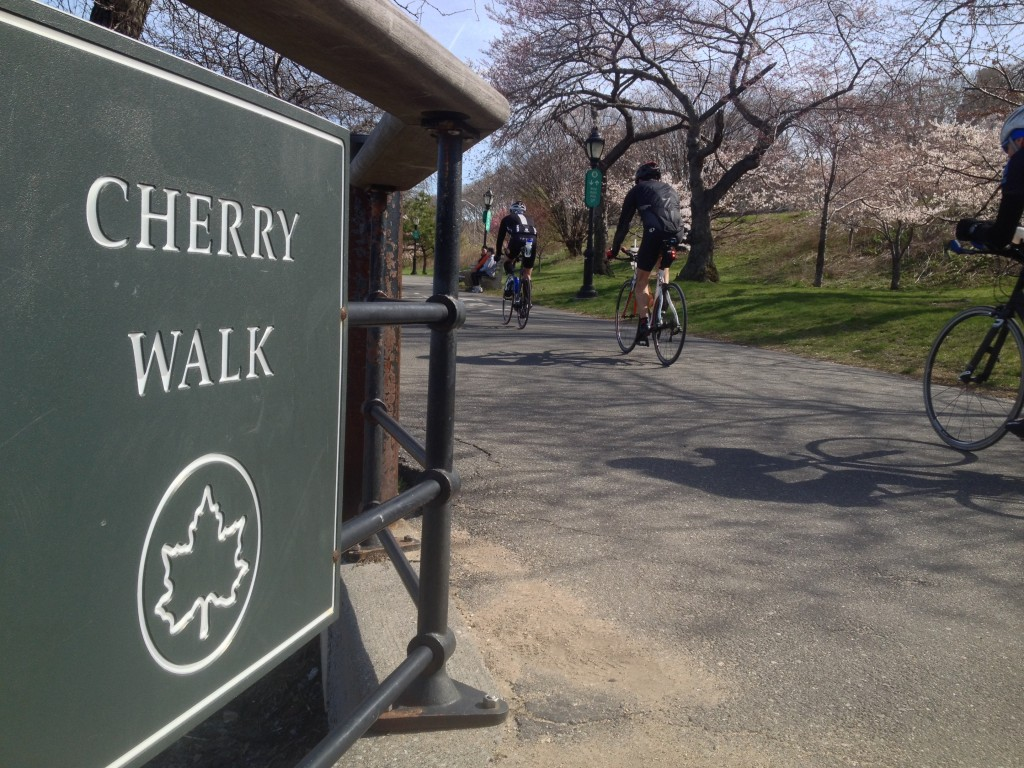 Cherry Walk, Riverside Park, NYC, Hudson River, scenic landmark, cherry blossoms, sakura, Japan, Henry Hudson, Robert Fulton
