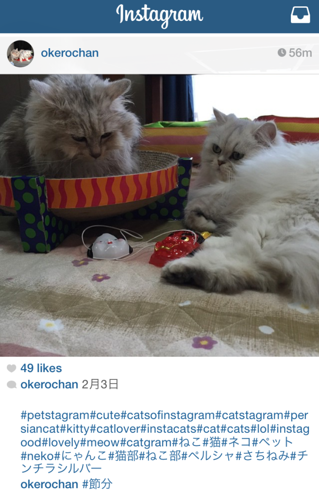 Setsubun, Japan, spring, seasons, Instagram, cats, neko, kawaii, nyanko