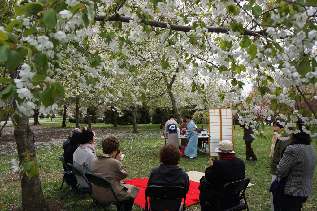 Sakura Matsuri, cherry blossom festival, cherry blossoms, sakura, matsuri, JAA, JAANY, Japanese American Association of New York, NYC, Japan, Flushing Meadows Corona Park, Soh Daiko, Junko Fisher, Urasenke Tea Ceremony, Japanese Folk Dance Institute