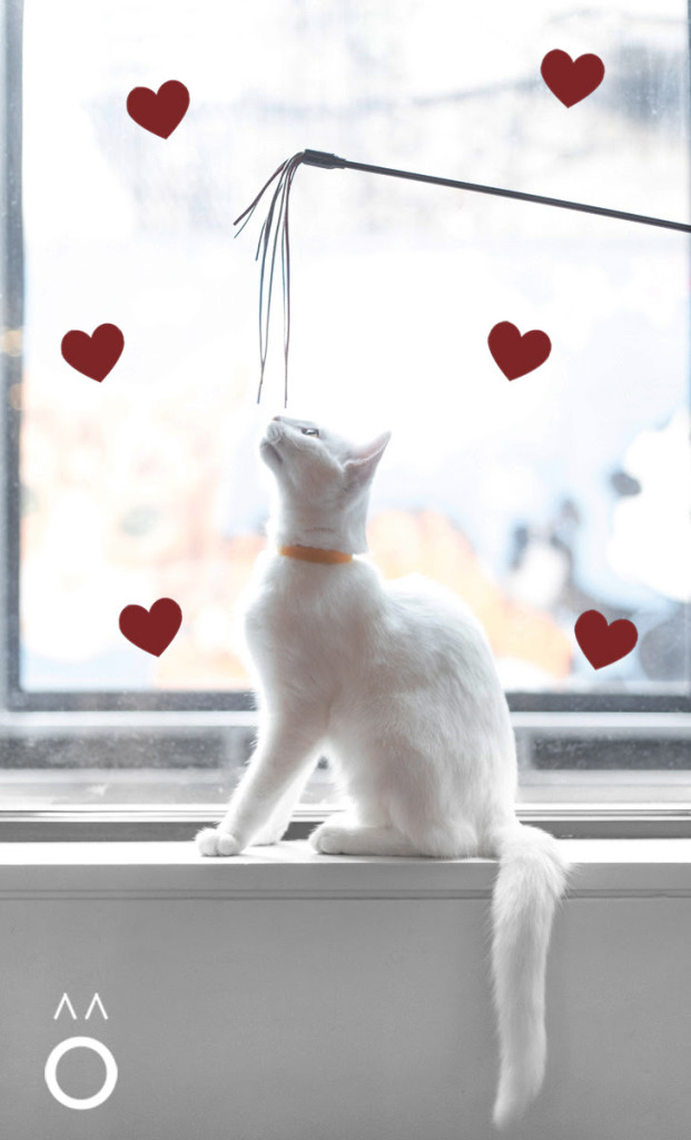Koneko, cat cafe, NYC, Japan, Valentine's Day, tasting menu, cats, neko