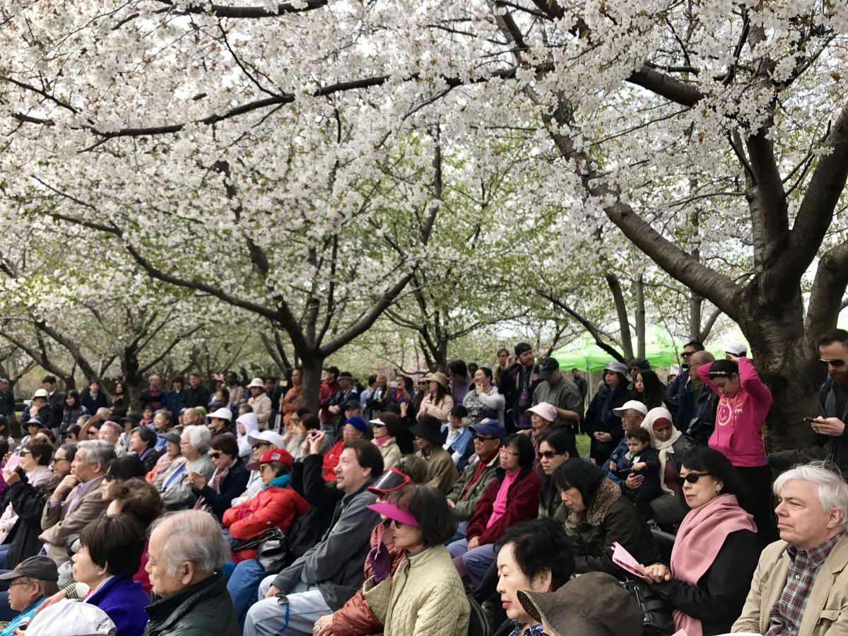 Japanese American Association of New York, JAA, JAANY, Sakura Matsuri, cherry blossom festival, cherry blossoms, sakura, Flushing Meadows Corona Park, NYC, Japan, NYC Parks Department