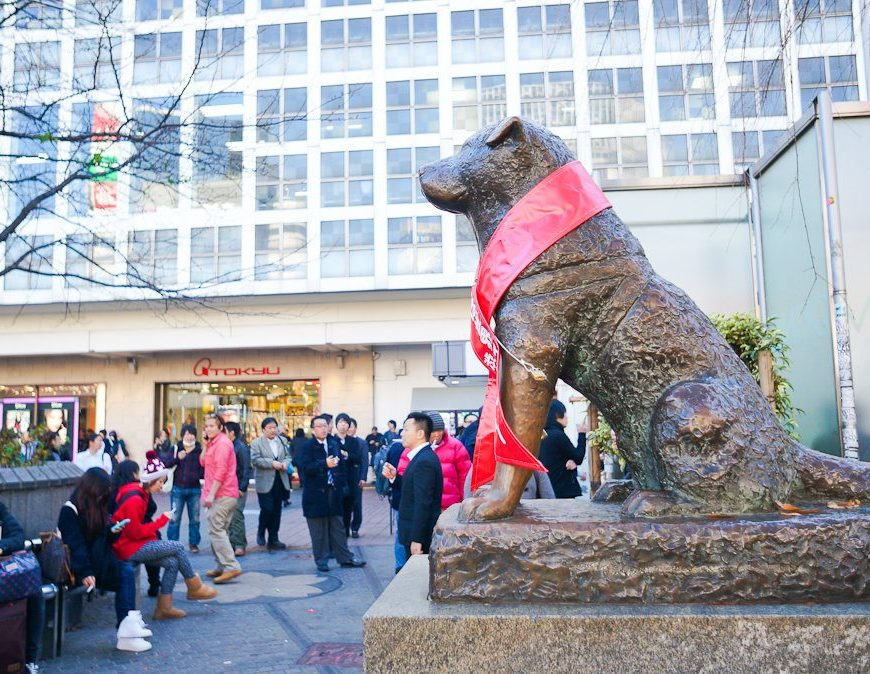Hachiko, Helen Keller, NYC, Japan, Japan Information Center, Consulate General of Japan in New York, photography, exhibition, Yumi McDonald, Shibuya